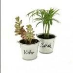 C5-mesinvites-visuel-mini-plantes