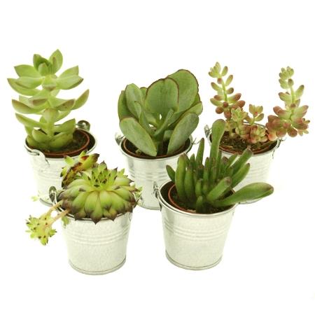 mini plantes grasses un cadeau pour tous les invit s. Black Bedroom Furniture Sets. Home Design Ideas