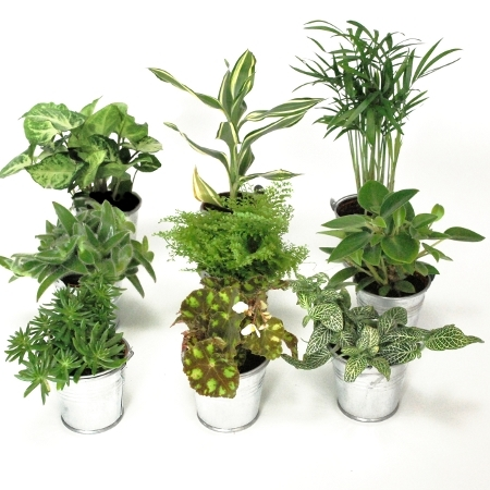 Mini plantes vertes cadeaux d 39 invit s mariage - Plante arbre interieur ...