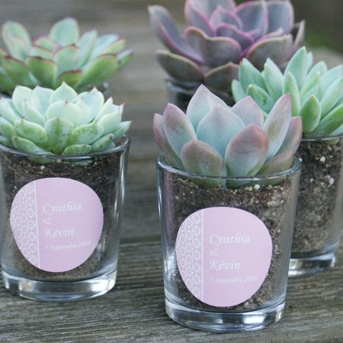 Succulentes personnalis es cadeau d 39 invit s mariage original - Idee cadeau invite mariage ...