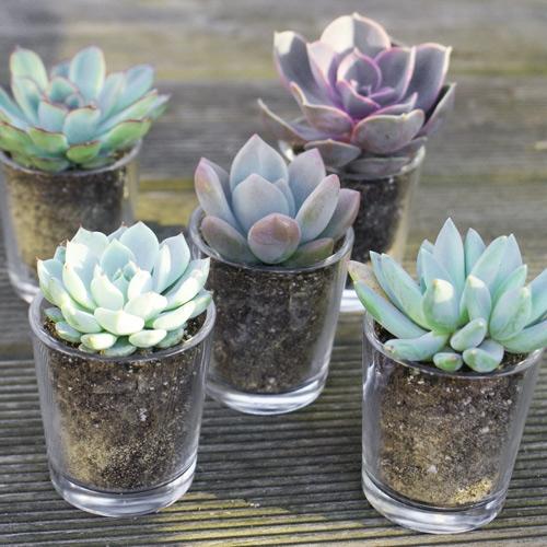 Mini plantes grasses un cadeau pour tous les invit s for Decoration de pot en verre